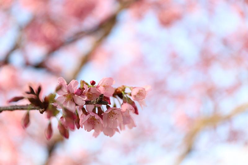 隅田川にて桜を撮影【2019年3月26日】のアイキャッチ画像